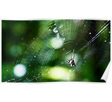 A Spider's Web Poster