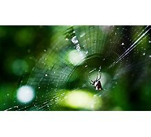 A Spider's Web Photographic Print