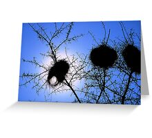 Weaverbird nests, Spitzkoppe Namibia Greeting Card