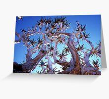 Aloe dichotoma (Quiver Tree) Namibia Greeting Card