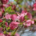 Profusion in Pink by Gilda Axelrod