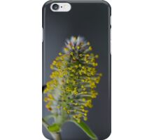Pussy Willow In Bloom iPhone Case/Skin