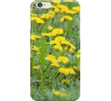 Yellow Dandelion Field iPhone Case/Skin