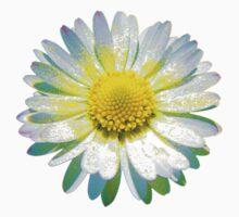 Trippy Daisy by caseyward