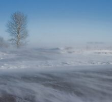 Blowing Snow by EchoNorth