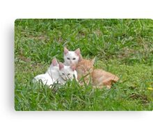 Cuddly kittens Canvas Print