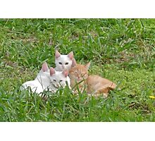 Cuddly kittens Photographic Print