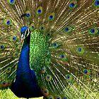 I am Blue by Elba Parra
