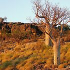 Baobs in the sunset by bushdrover