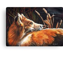 For Fox Sake Canvas Print
