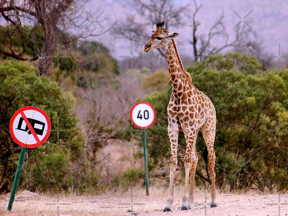 """IS THIS A EDUCATIONAL SIGN"" am I taller? my speed should be OK ! by Magriet Meintjes"