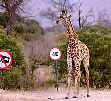 """IS THIS A EDUCATIONAL SIGN"" am I taller? my speed should be OK ! by Magaret Meintjes"