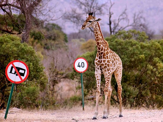 """""""IS THIS A EDUCATIONAL SIGN"""" am I taller? my speed should be OK ! by Magriet Meintjes"""