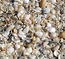 Beach Collection by Donna Adamski
