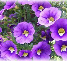Purple Patunias by James Brotherton