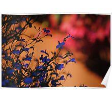 Vibrant Flowers.  Poster