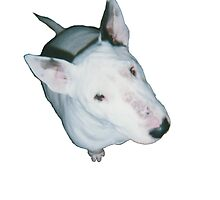 English Bull Terrier  by ahsdesign