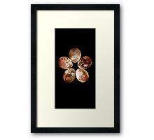 flower egg Framed Print