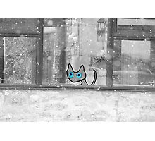 Cat Looking Out The Window In Winter Photographic Print