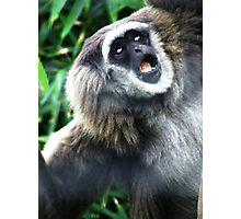 Gibbon Photographic Print