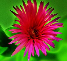 pink on green by Michael Bisset