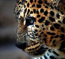 Feline Beauty by Squealia