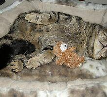 Bonzo Loves His New Bed by John Hooton