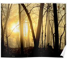 Nibbling Bunny Meets Morning Sun in Foggy Forest Poster