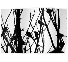 Wagtail Roost I Poster