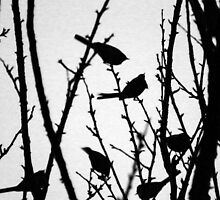 Wagtail Roost II by GreyFeatherPhot