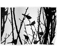 Wagtail Roost II Poster