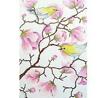 White-eyes on magnolia tree Photographic Print
