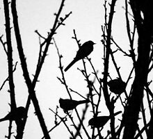 Wagtail Roost III by GreyFeatherPhot