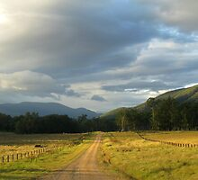 Country Road on way to Mann River Nature Reserve by Marilyn Harris