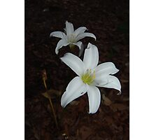 Atamasca Lilies Photographic Print