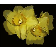 Daffodils..............................Most Products Photographic Print