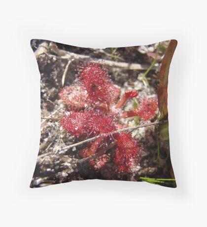 Drosera Rotundifolia Throw Pillow