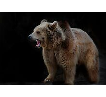 Brown Bear Photographic Print