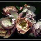 Wild Roses by jules572