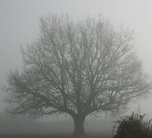 Oak Tree in the Fog by Pamela Jayne Smith