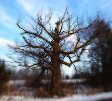 The Spooky Old Tree in Motion  by Cathy  Beharriell