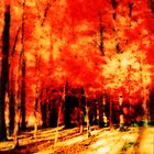 Forrest in colours :) by bbtomas