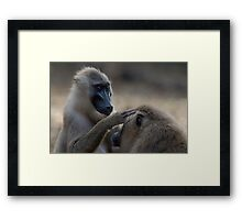 Grooming Drills Framed Print