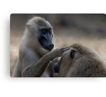 Grooming Drills Canvas Print