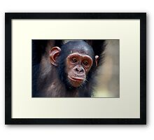 Soft Gaze Framed Print