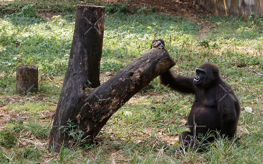 Gorilla Tree by ApeArt