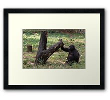 Gorilla Tree Framed Print