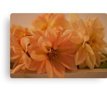 Peachy Dahlias Canvas Print