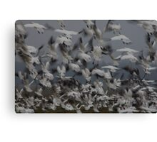 Causing Chaos amongst the Geese Canvas Print