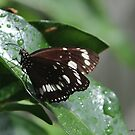 butterfly after rain by Jeannine de Wet